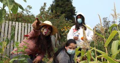 Jardin Santuario: Un lugar seguro para que la comunidad plante, crezca y se una